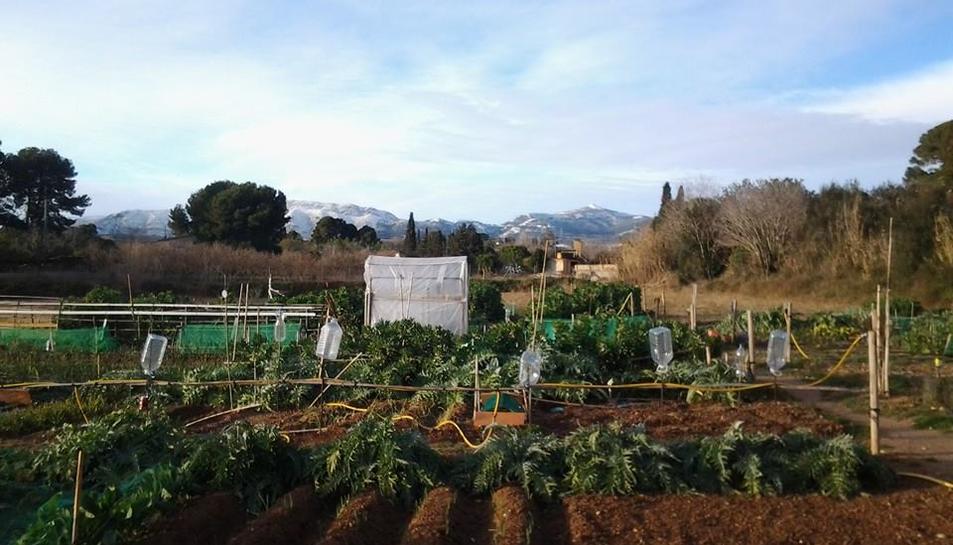 Los huertos urbanos en la provincia de Tarragona
