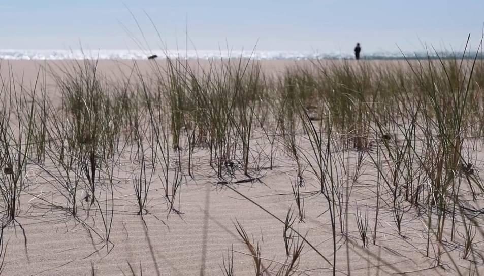 Dues dunes experimentals a Torredembarra