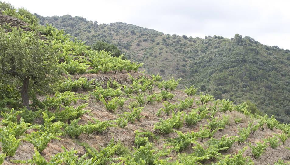 El club de vinos más importante de Europa da el sábado el pistoletazo de salida al año Priorat-Montsant