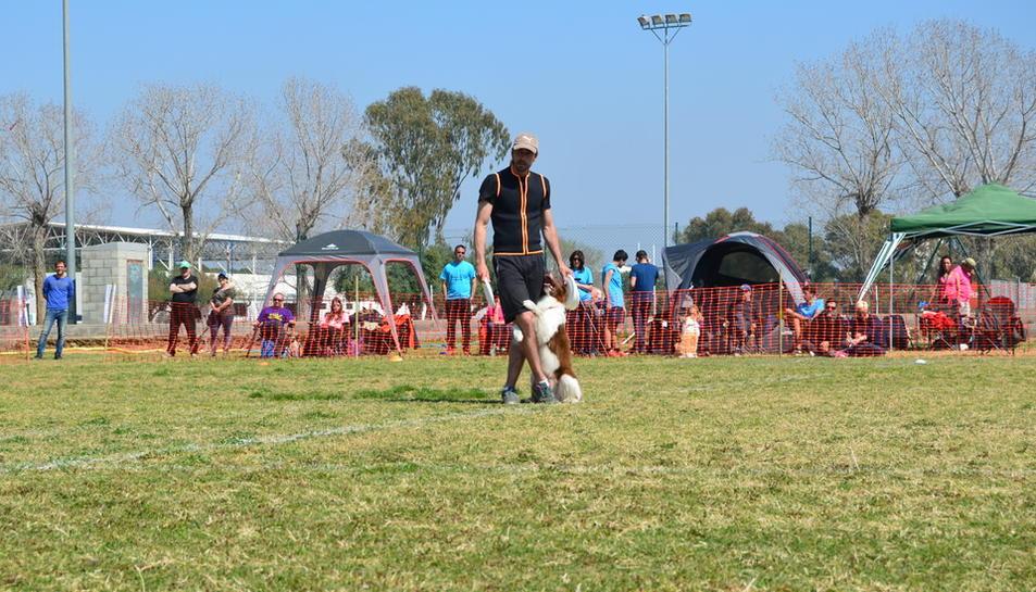 Espectaculares actuaciones de los perros en el campeonato de 'Dogfrisbee' celebrado en la Laboral