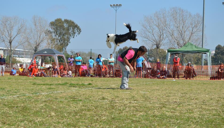 Espectaculars actuacions dels gossos en el campionat de 'Dogfrisbee' celebrat a la Laboral