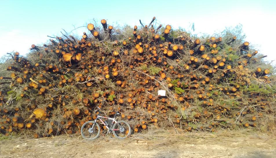 La CUP alerta sobre la tala de pins a l'Anella Verda