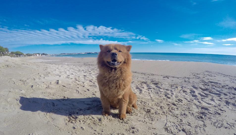 Els gossos ja no podran entrar a les platges de Cambrils