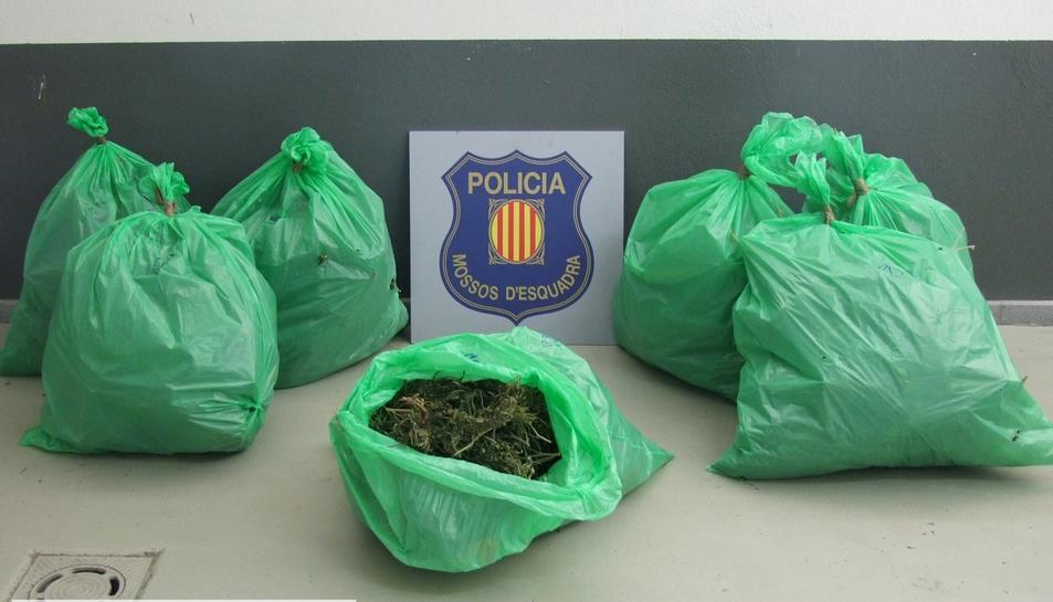 Detingut un home al Priorat per cultivar més de 680 plantes de marihuana