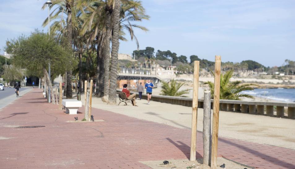Apareixen abres tallats per actes vandàlics al passeig Marítim