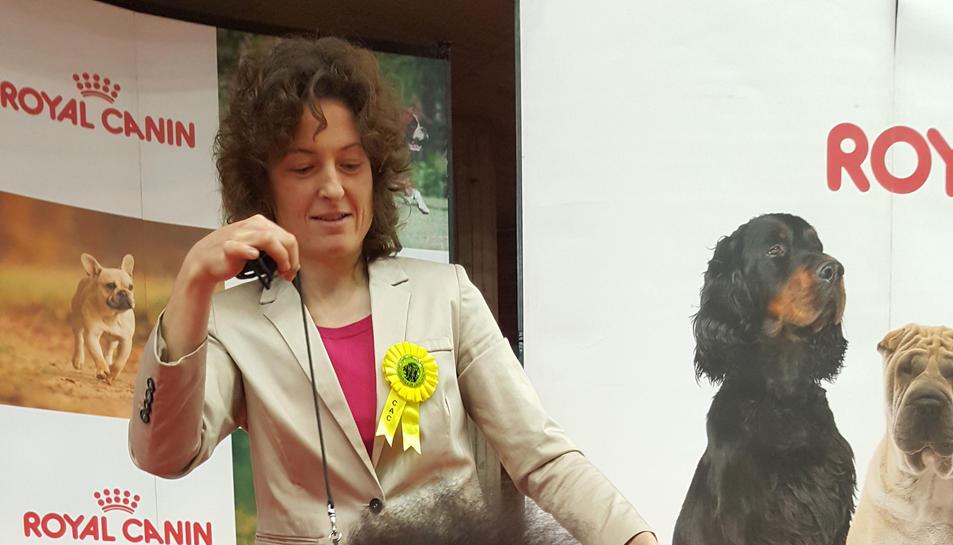 Un gos de l'Hospitalet guanya el Campionat de Catalunya de Bellesa