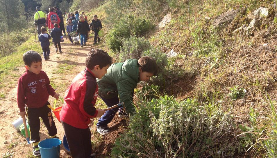 Els alumnes de Vandellòs han celebrat el Dia de l'Arbre