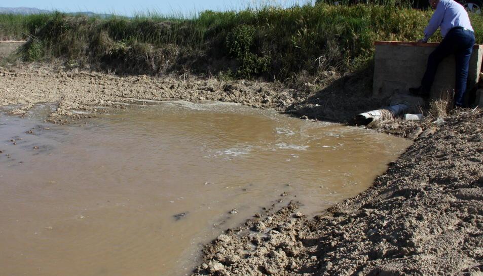 L'aigua torna a inundar els arrossars del delta de l'Ebre amb preucupació pel caragol maçana