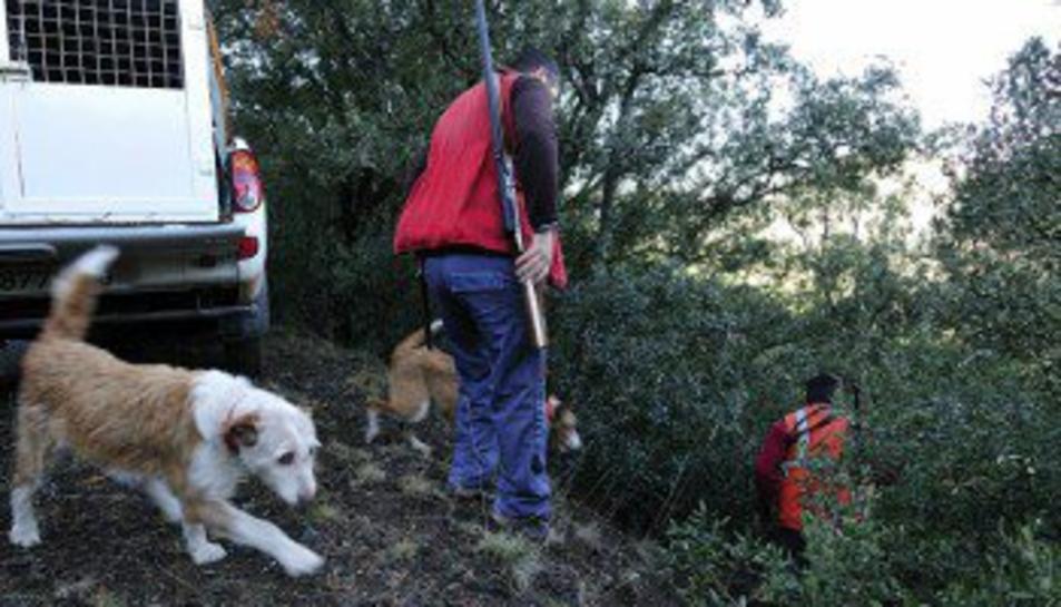 La població de senglars del Bosc de Poblet es quadruplica des del 2014