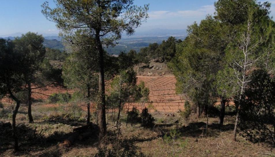 Agricultura inicia treballs de prevenció d'incendis del massís forestal de Tivissa-Vandellòs-Llaberia-Pradell