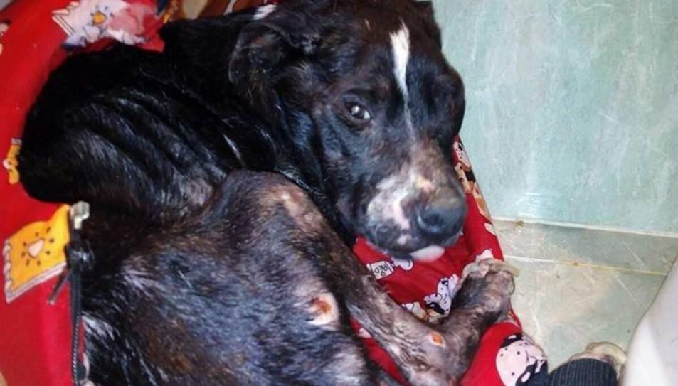 Mobilització a Amposta per denunciar l'augment de gossos trobats en contenidors