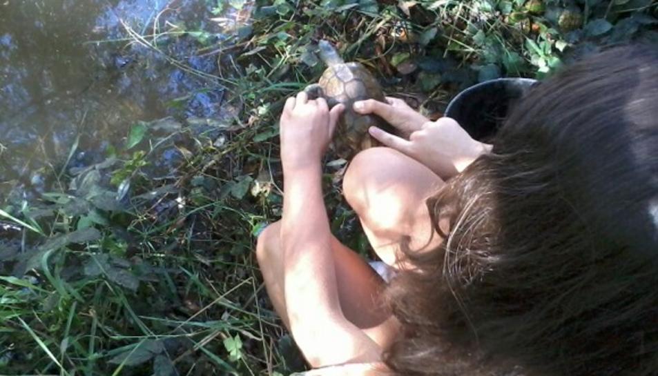 El projecte 'la tortuga de rierol viu al Gaià' celebra 10 anys