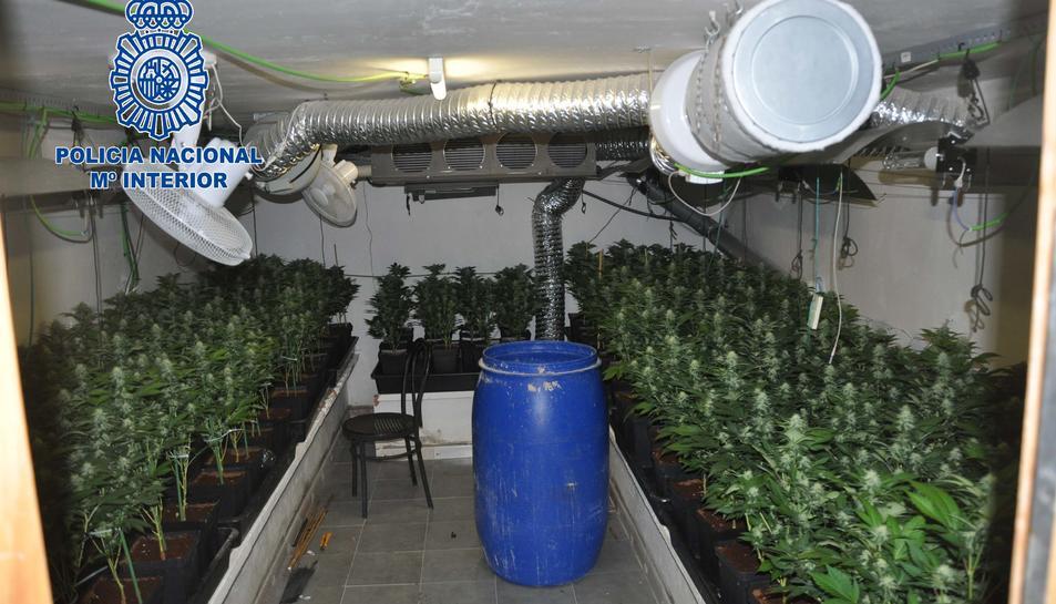 Desmantellen tres plantacions de marihuana al Montmell