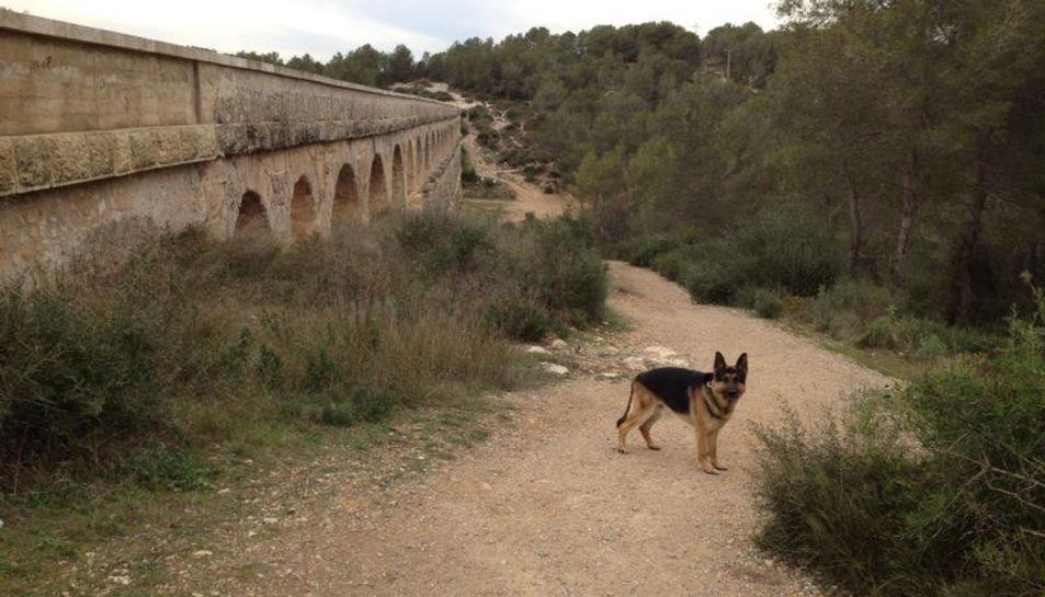 Neix una plataforma dedicada a cercar i rescatar gossos