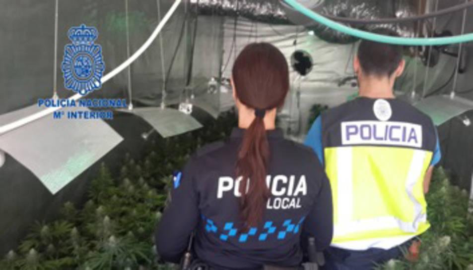 Desmantellen una plantació de marihuana gestionada per narcotraficants a Calafell