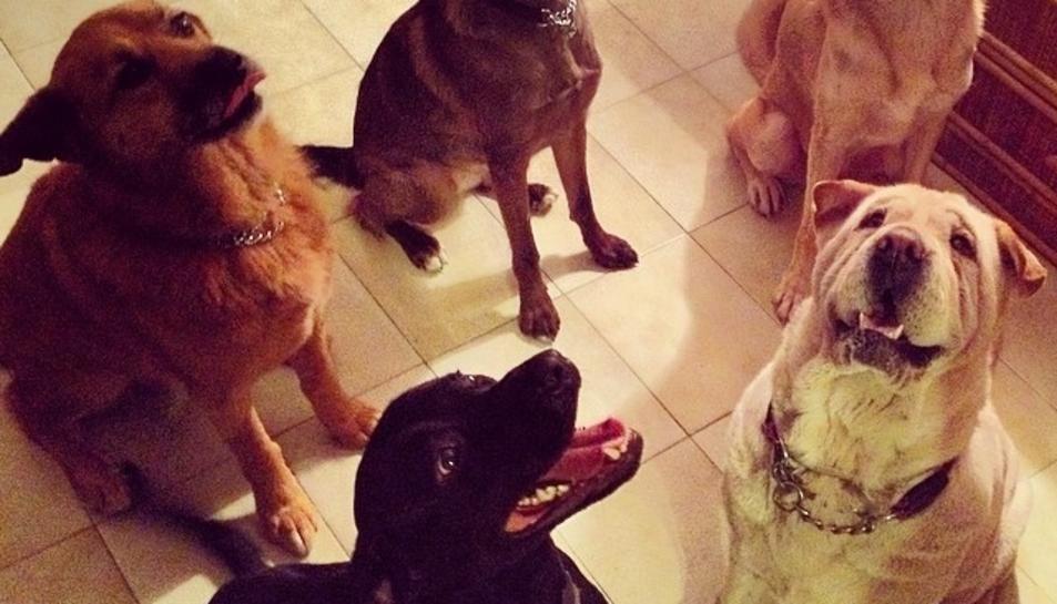 Els gossos entenen què diem i com ho diem
