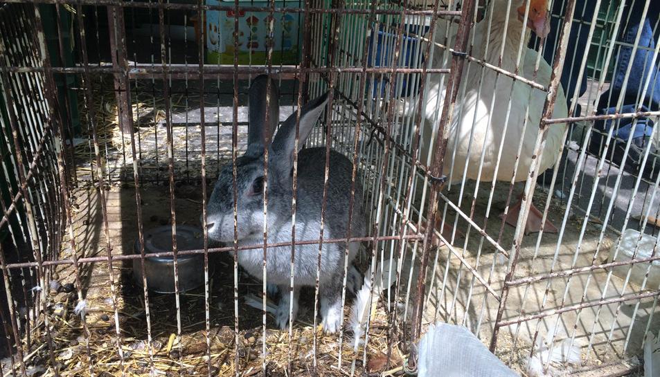 Imatge d'aquesta darrera setmana en una de les parades d'un conill i una oca en les seves gàbies.