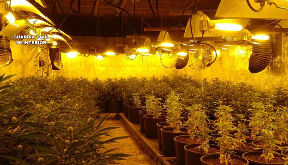 Desarticulat a Tarragona un clan serbi que es dedicava al tràfic de marihuana