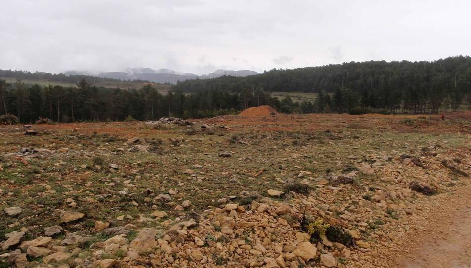 Gepec porta a la Fiscalia la tala dels boscos del Parc dels Ports per part de la Generalitat