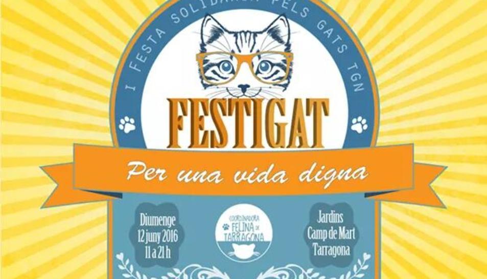 Els gats, protagonistes a Tarragona amb la primera festa solidària FestiGat