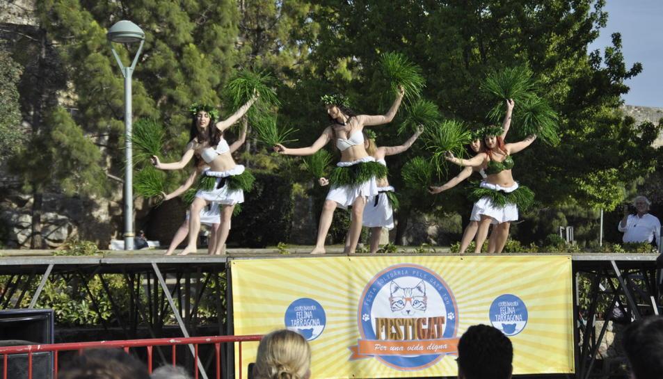 Les associacions de gats del Camp de Tarragona celebren el 1r FestiGat