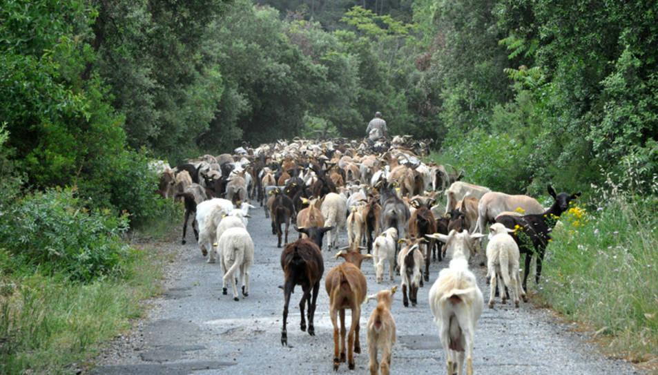 El Paratge Natural de Poblet recupera l'antic camí ramader que unia el monestir i Prades