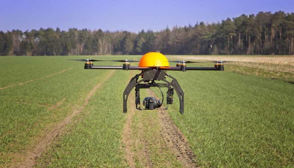 Els drons permeten visualitzar, a través d'imatges, les diferències en l'aspecte del cultiu.