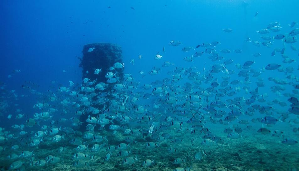 Repsol instal·la 20 boies ecològiques al litoral tarragoní