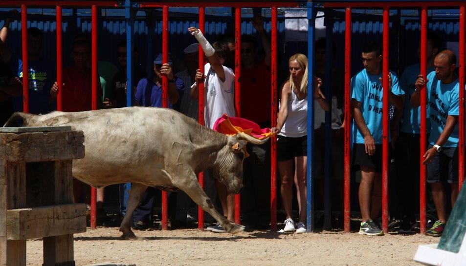 Aficionats es resguarden del pas d'una vaca a la plaça de Sant Jaume d'Enveja. Imatge del 26 de juny de 2016