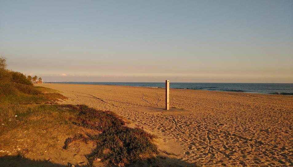 La platja de les Madrigueres del Vendrell s'està recuperant com a espai natural.