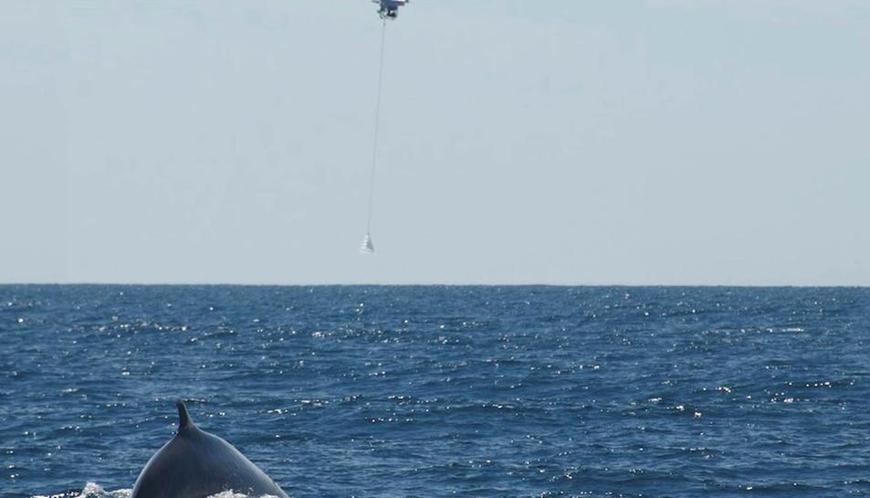 El nombre d'avistaments de balenes es duplica aquest 2016