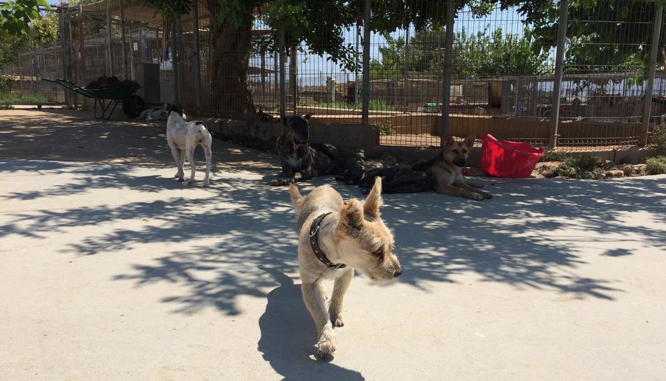 Imatge de la llar d'Olescan, on anaven els gossos del Baix Camp.