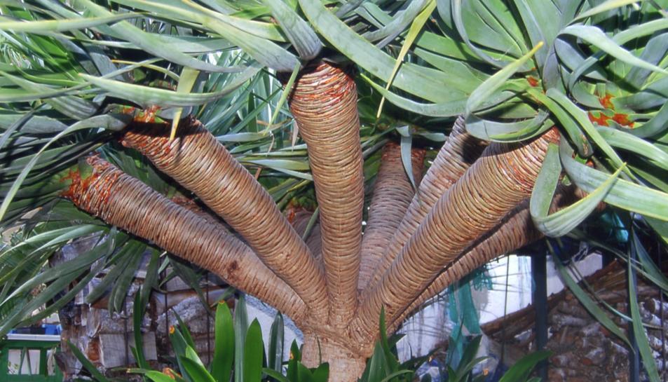 Enamora't d'una planta en perill