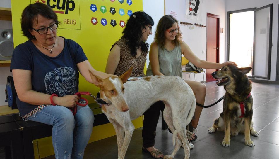 La CUP presenta una moció de  68 pàgines sobre el dret dels animals