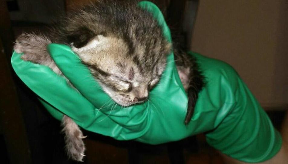 Troben quatre gats d'una setmana de vida en un contenidor de vidre a la Granja