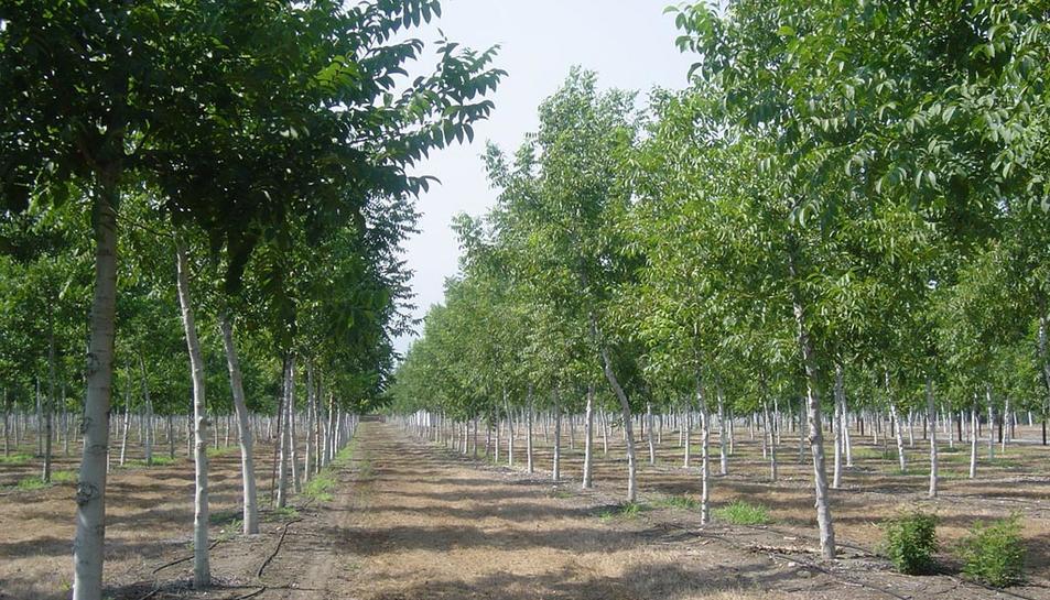 Ecolumber compra Cododal i 22 hectàrees nogueres d'Alcover per 1,85 milions euros
