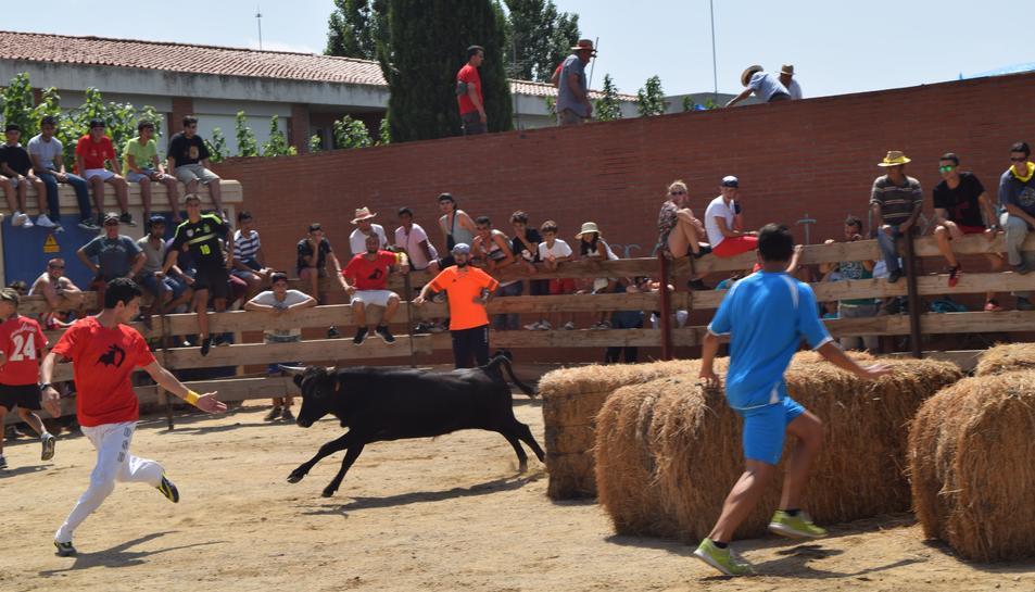 El municipi del Morell s'ha aplegat, aquest dissabte al matí, per donar el tret de sortida a la 29ª edició del tempteig de vaquetes.