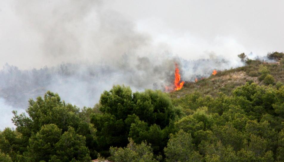 Detall de les flames que cremen a la Pobla de Montornès, el 5 d'agost de 2016 (horitzontal)