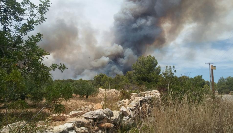 Imatge de l'incendi des d'uns camps de cultiu propers