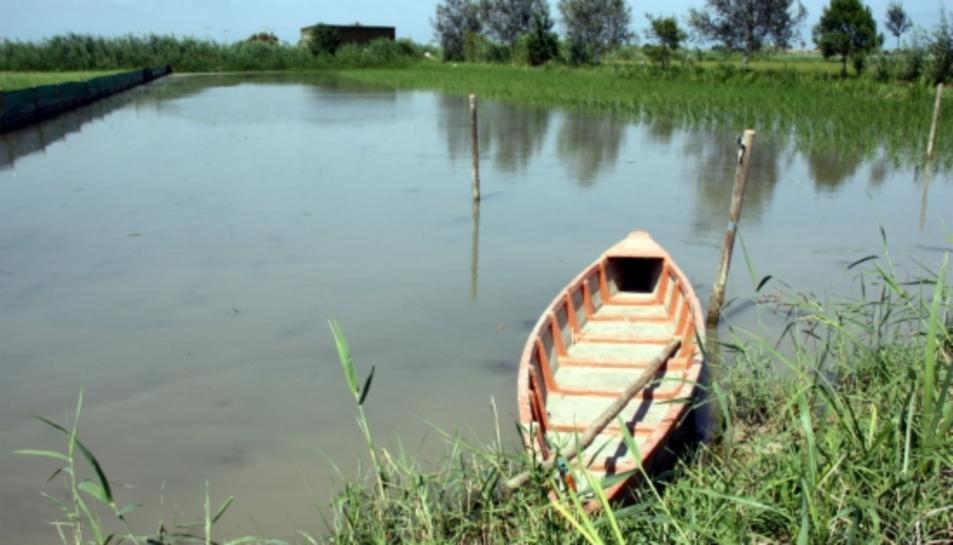 SEO Bird Life alerta que el delta de l'Ebre és un dels quatre «santuaris per a aus» més amenaçats d'Espanya