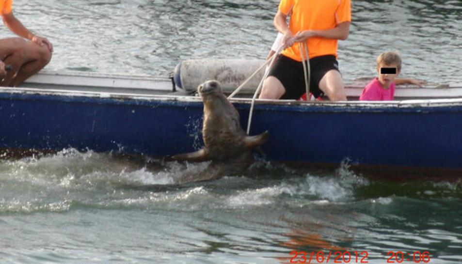 Prohibits els bous a la mar de les Cases d'Alcanar per primera vegada en 40 anys