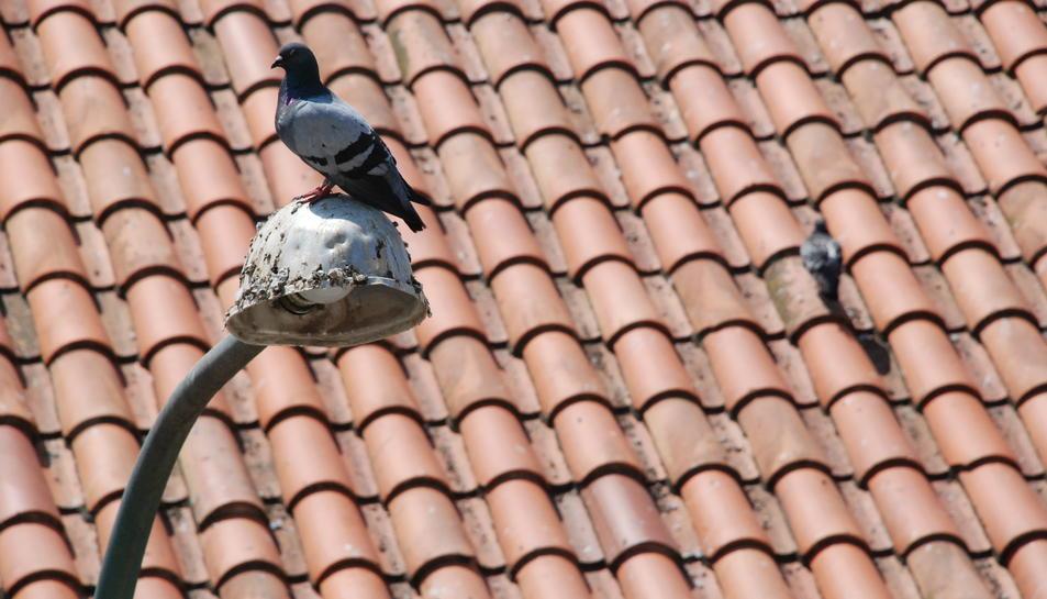 La Diputació destina gairebé mig milió d'euros per combatre insectes i coloms