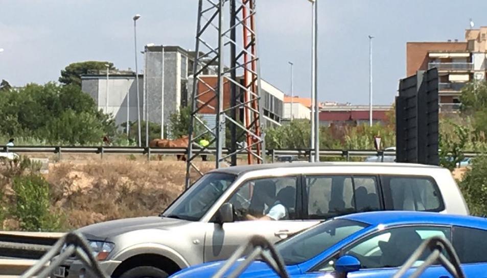 Un cavall s'escapa d'un remolc a l'A7 a Tarragona
