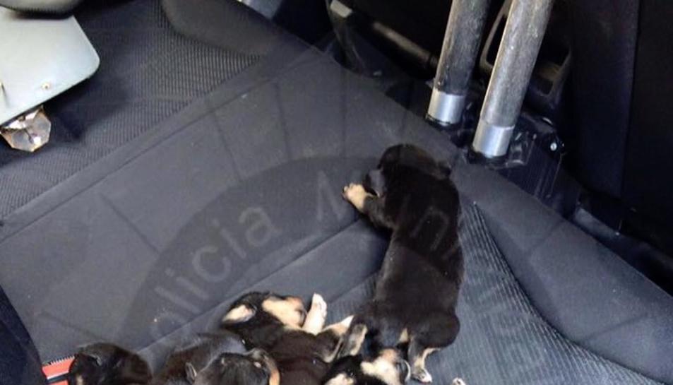 Imatge dels cadells recuperats per la policia local.