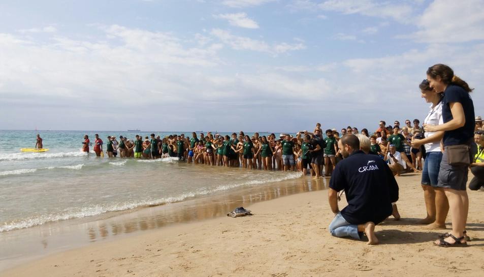 Les tres tortugues van néixer fa tres anys a Tarragona.