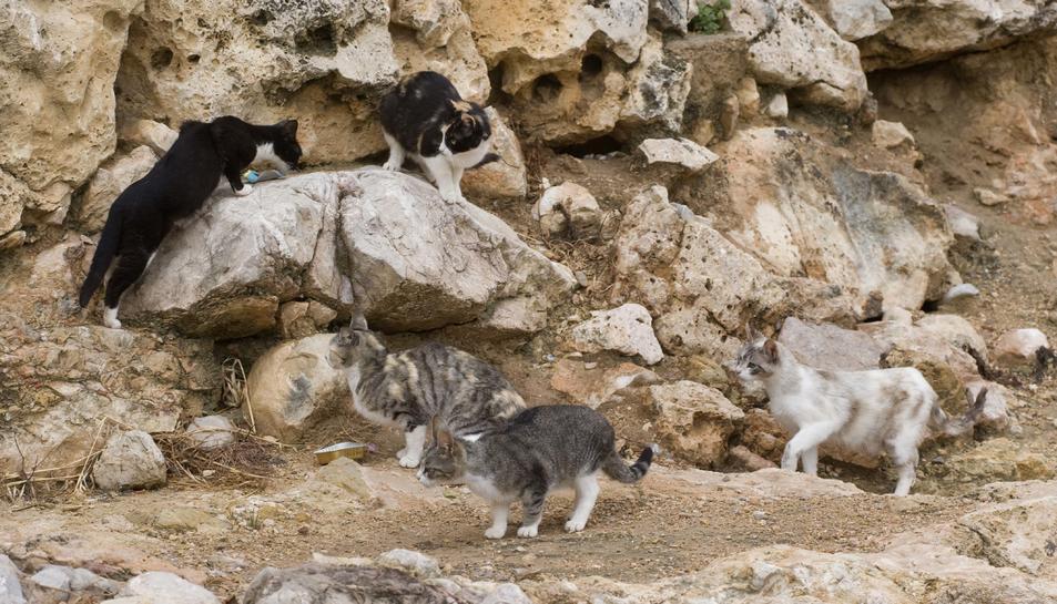 Creix el nombre d'abandonaments de gats a la ciutat en el darrer estiu