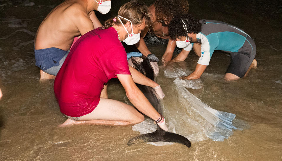 Moment en el qual els especialistes treien el dofí de l'aigua.