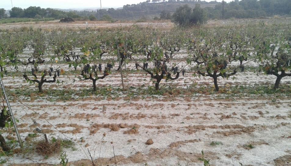 Unió de Pagesos calcula que la pedregada ha causat greus danys en les collites de vinya i ametlla