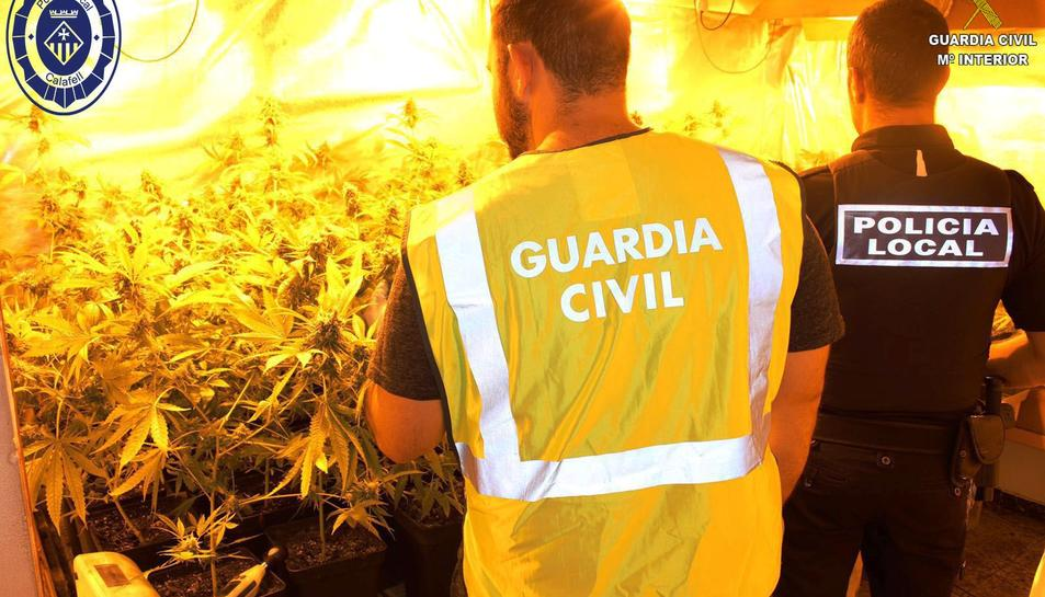 Una part de l'habitatge s'havia habilitat per la plantació de la marihuana.