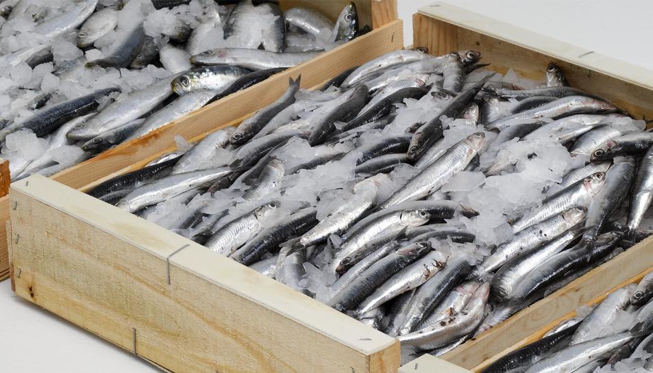 Els nens espanyols mengen peix amb alts nivells de mercuri
